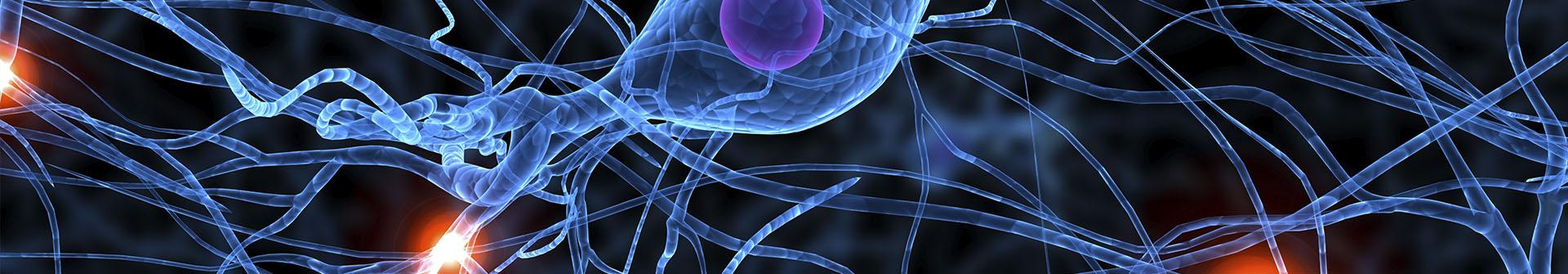 המרכז הקליני לחקר המוח